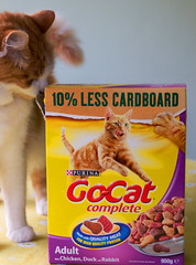10% less cardboard (shimmer2) Tags: cat charlie cardboard driedcatfood
