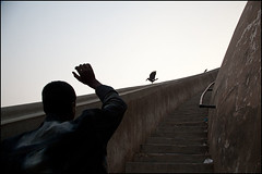 Crow - Patna (Maciej Dakowicz) Tags: india bird animal asia crow granary bihar patna