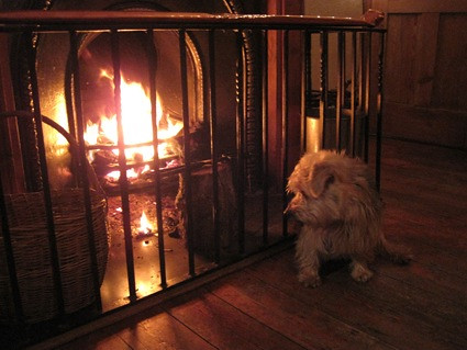 Jasper by the fire