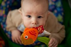 9 : 365 (David_Harris) Tags: fish canon head fishheads heads 85mmf12 fishhead exersaucer 85mm12 85f12 frederickalanharrisatlanta