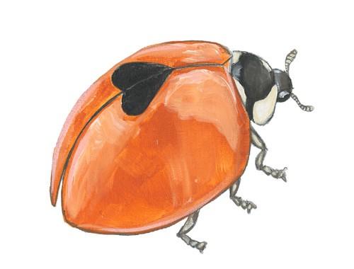 nori-the-ladybug
