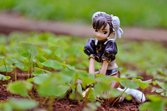 Little Chun-li (M. Ribeiro ) Tags: street black anime cute fighter figure organic chunli limitedver outdoorshot pvcfigure
