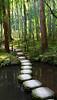 Path (Aaron Webb) Tags: japan garden kyoto stones 京都 日本 nanzenji kyotojapan formalgarden japanday7 南禅寺 園 nanzenjigarden
