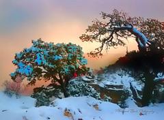 Morning Light at Grand Canyon (Aspenbreeze) Tags: morning winter snow fog nationalpark searchthebest grandcanyon canyon cliffs redrocks grandcanyonnationalpark arizonia junipers aspenbreeze mygearandmepremium grandcanyonarizonia