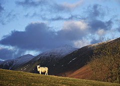 Just ewe and me (Lune Rambler) Tags: winter sky mountains nature beauty landscape sheep natural lakes lakedistrict silence cumbria fells ambleside splendour lightandshade troutbeck kirkstone oltusfotos lunerambler tripleniceshot