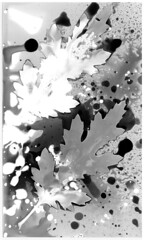 Twins: White/Black (One Finger Snap) Tags: blackandwhite bw darkroom fix scan prints process ilford xerox alternative photogram csm sabattier cameraless solarisation resincoated chemigram multicontrast onefingersnap 1fingersnap deveroper proofpaper