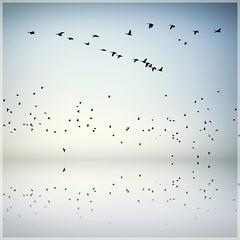 Birds, birds, birds (ms holmes) Tags: black reflection birds square flying geese many silhouettes vögel spiegelung viele schwarz swarm alot fliegen quadrat gänse schwarm imflug challengeyouwinner thechallengefactory canoneos1000d
