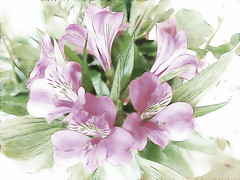 Alstroemeria (Brenda Boisvert .) Tags: pastel topaz supershot anawesomeshot kunstplatzlinternational factalius alstroemeriaflowermanipulation