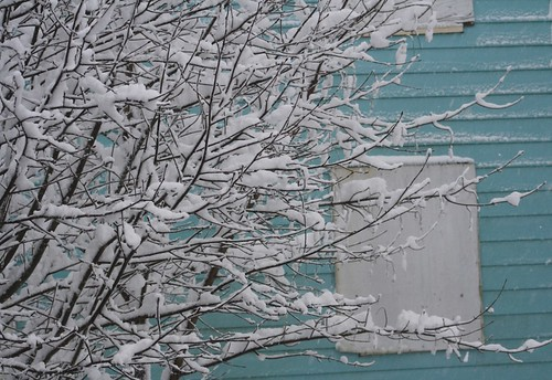 First snow day of the year. The boarded up crackhouse in my backyard looked pretty. I like pretty things.