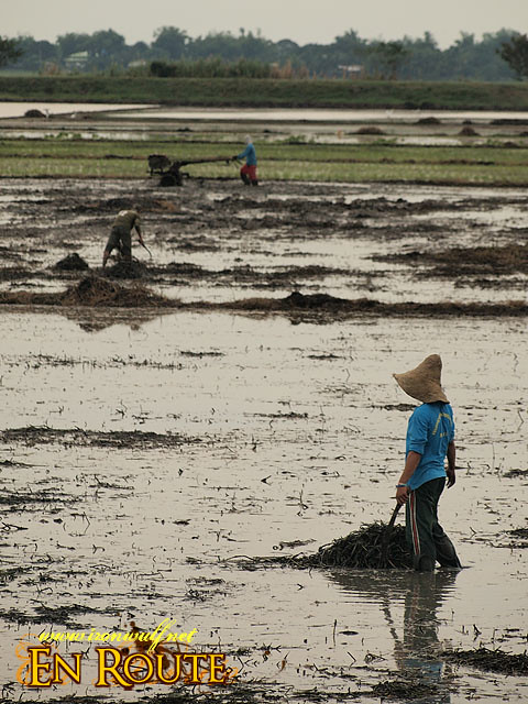 Farmers tilling the land