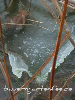 Eis auf dem Teich, 17.1.2011