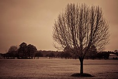 (HisPhotographs.com) Tags: trees tree sc vintage landscape university southcarolina charleston northcharleston charlestonsouthernuniversity