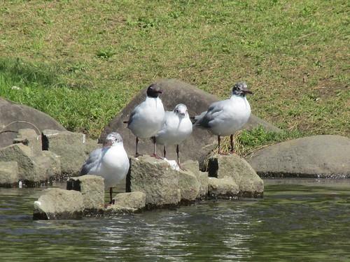 Parc de Sumida, Tokyo, Japon