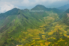 Y9541+43.0916.Xm Vng.Bc Yn.Sn La (hoanglongphoto) Tags: asia asian vietnam northvietnam northwestvietnam outdoor landscape scenery morning mountain flank terraces terracedfields terracedfieldslandscape terracedfieldsinvietnam terracedfieldsinxinvang mountainouslandscape mountainscene canon canoneos1dx canonef70200mmf28lisiiusmlens tybc snla bcyn xmvng ngoitri phongcnh ni sierra dyni dale thunglng snni harvest rungbcthang lachn magt phongcnhvngcao rungbcthangxmvng phongcnhsnla phongcnhtybc defile hmni