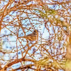 #goodevening  #_  # #birds #bird #instabird #  # # #instabirds #insyaanimals #instaanimal #animal #animals #hdr #sonyalpha  #saudiarabia  # # #sonya (photography AbdullahAlSaeed) Tags: goodevening birds saudiarabia instaanimal instabirds   instabird bird sonyalpha  sonya animals animal  hdr insyaanimals