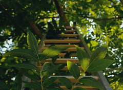 Going up to the sky. Leaves Green Green Green!  Ray Of Sun Nature Stairs Nature Photography Pentax K-50 Up To The Sky Brightness (fabiola_justo) Tags: leaves greengreengreen rayofsun nature stairs naturephotography pentaxk50 uptothesky brightness