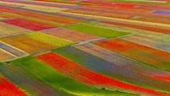 piana (Fr@tes) Tags: castellucciodinorcia castelluccio colori colors explore canon eos fioritura