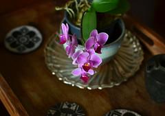 Delicadezas em casa (Mrcia Valle) Tags: home homesweethome emcasa decorao homedecor stilllife natureza orchids orqudeas brasil brzail mrciavalle nikon d5100 pink prpura purple flowers flores