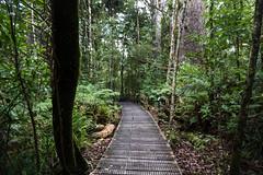 Waipuoa Forest