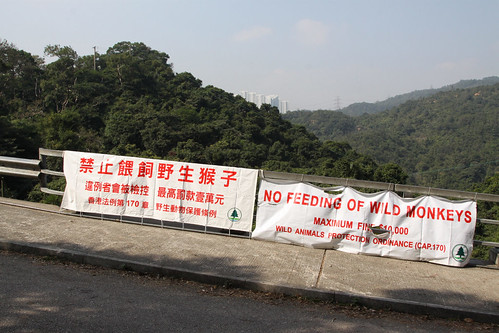'No feeding of wild monkeys: maximum fine $10,000'