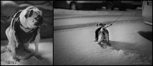 My Dog Hates the Snow.
