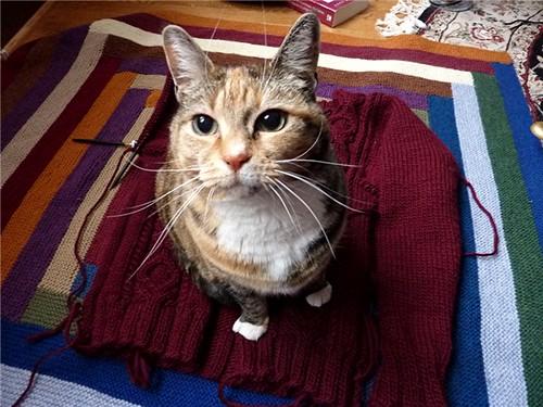 knitcat