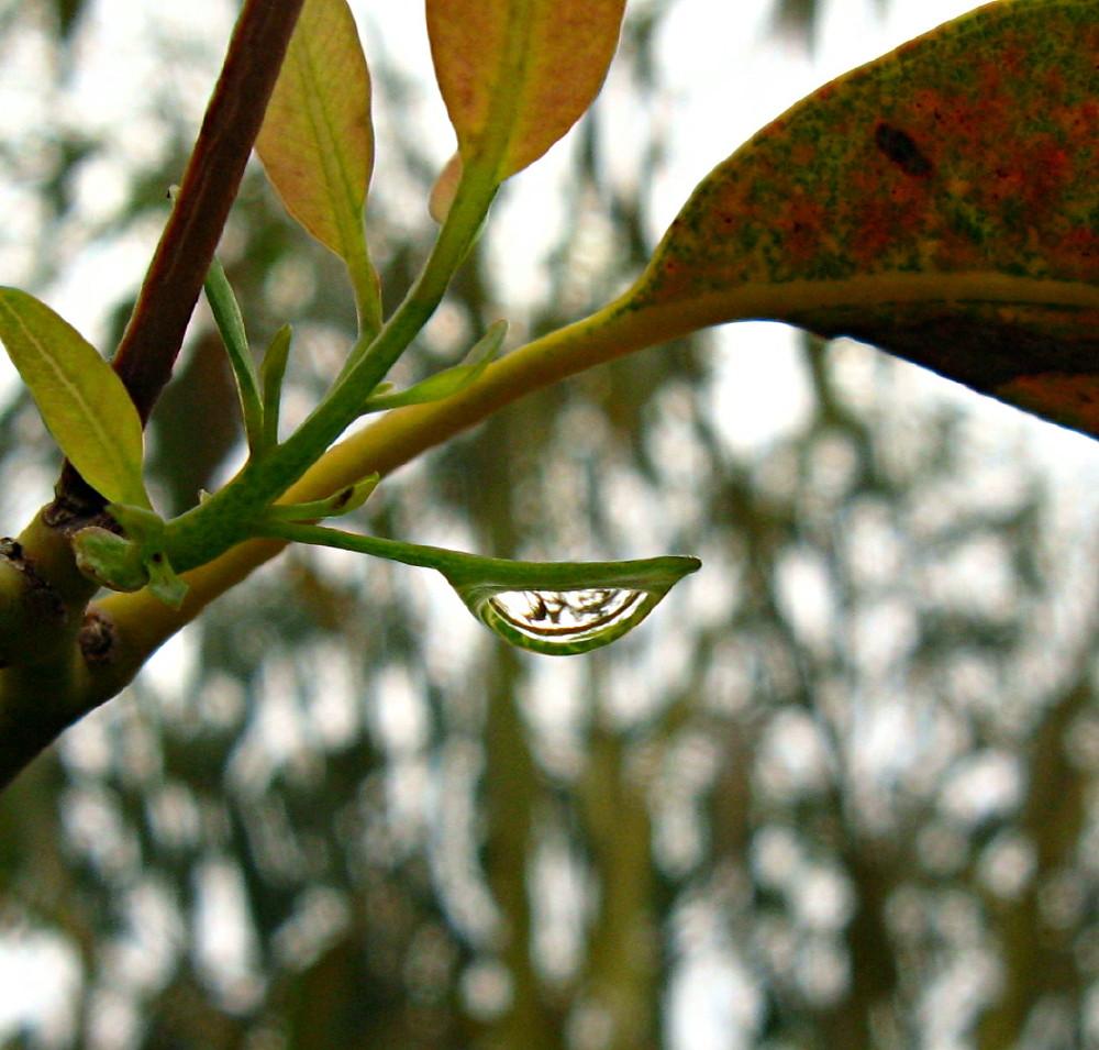 05-02-2011-raindrop