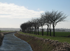 Ditch and Trees (Louise and Colin) Tags: uk blue trees england green bird english rural river flying kent ditch farm sunny farmland agriculture soaring sewer wintertrees marshland fairfield drainage agriculturalland appledore wintry brookland romneymarsh selfcatering puddockfarm pinelodges