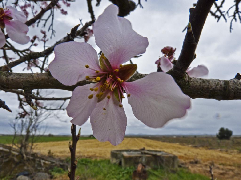 Señales de primavera