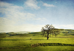 Lone Oak.......... (Michael Brooking Photography) Tags: california blue sky tree green field grass clouds creek is spring nikon alone treasure mother textures most pasture terrible teresa layers lonetree altamont distagon carlzeiss d700 poverty michaelbrookingphotography loneliness