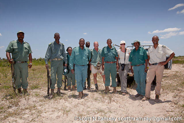 South Africa - KwaZulu Natal - iSimangaliso Wetland Park - A team of rangers working to take a snare off a giraffe's leg.