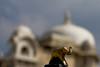 At Jagmohan Palce Udaipur (Tarun Chopra) Tags: travel india canon photography 7d gurgaon rajasthan udaipur bharat hindustan hindusthan indiatravelphotography canon7dgurgaon jagmohanmandircanon7dgurgaonpushkar rajasthaninwinters gurugram