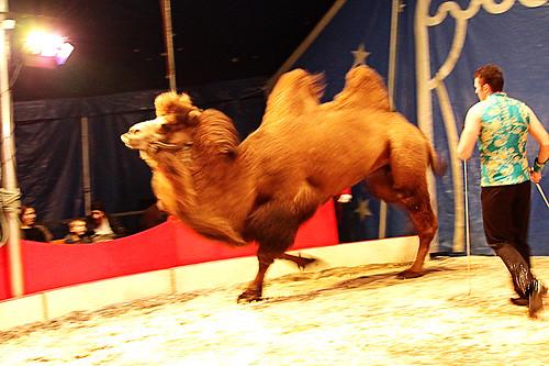 Circus20