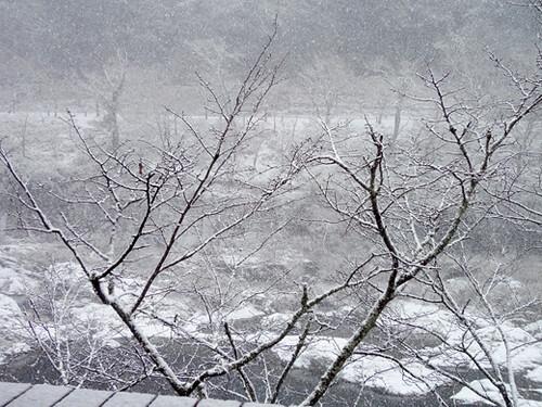 kyoto arashiyama 8_2