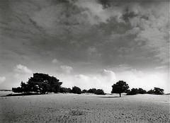 Appelscha Holland (Guido Havelaar) Tags: blackandwhite bw holland netherlands monochrome monotone schwarzweiss pretoebranco noirblanc appelscha 黑白色 neroeblanco ブラックホワイト чорныбелы