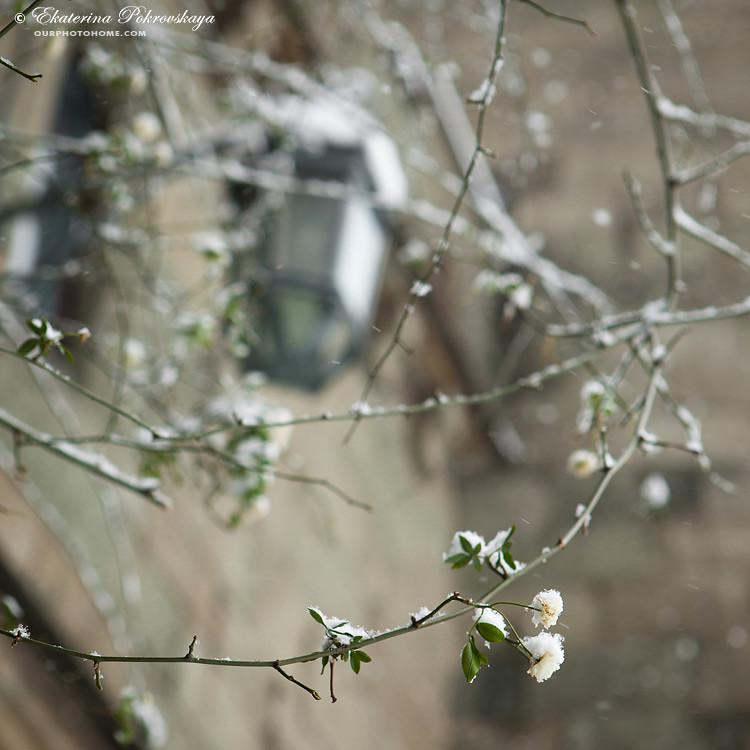 Voroncov_palace__winter_02