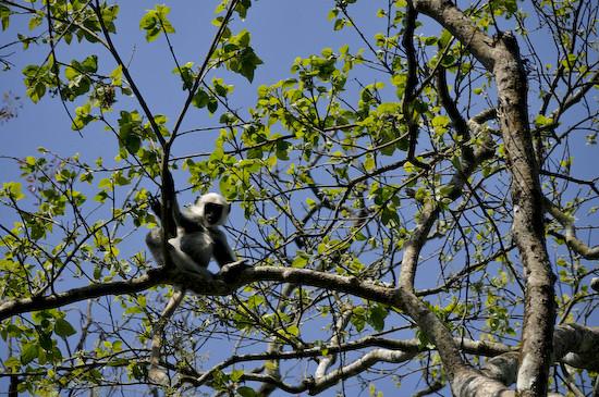monkey5463