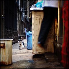 (David Panevin) Tags: japan cat tokyo alley shinjuku bokeh olympus stray neko e3 clutter notmycat sigma30mmf14exdchsm noraneko catsonthescene davidpanevin