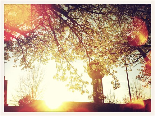 Spring Sets on Knoxville #crossprocess