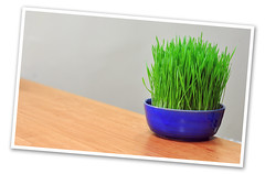 Smell of Spring ... (1Ehsan) Tags: spring iran بهار norooz norouz nowruz noruz نوروز سبزه