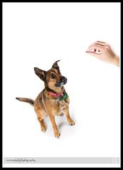 Pawsitively Portraits: Dog Day (Sean Phillips) Tags: ca dog pet canada calgary animal alberta daycare 3x3 petportrait doggydaycare dogdaycare photobyseanphillips calgaryportraitphotographer calgarypetphotographer pawsitivelynatural pawsitivelynaturaldogdaycare pawsitivelyportraits