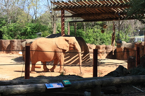 Elephant at Zoo Atlanta