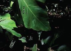 Exposición - Esa Cosa Verde De Ahi Afuera - Galeria Travesia Cuatro