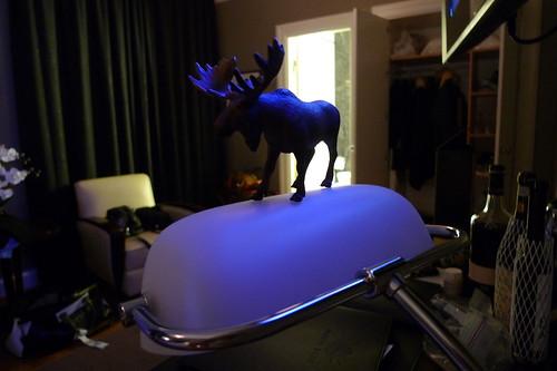ye moose, hotel borg