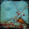 Merle d'Amérique (meehanf) Tags: bird texture robin merle oiseau firstquality simplybeautiful idream flickraward mygearandme lenabem