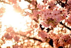 Spring & bokeh theme, day 7: warm afternoon (sandra_s.) Tags: tc