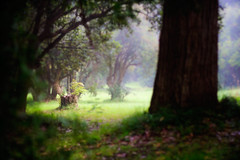 dreamy (Matt Hovey) Tags: trees light mist nature grass rain fog digital canon dark landscape photography eos photo scenery image photos scene lord rings dreamy lordoftherings thehobbit lightroom dandenongranges lowcloud 1000d treesclearing matthovey stumphobbits matthewhovey