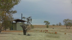 Loo with a roo or two (spelio) Tags: queensland qld june 2016 travel wildlife roo kangaroo toilet outback remote shed building tin rocks