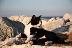 Cat on the stones (mirko100976) Tags: gatto cat gatti cats stones stone pietra roccia scoglio scogli pietre animali