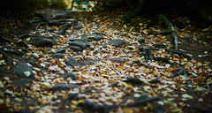 Colors of autumn (Budoka Photography) Tags: autumn forest leaf nationalpark manualfocus manual landscape nature canonllens sonyalphailce7rm2 canonfd50mmlf12 bokeh